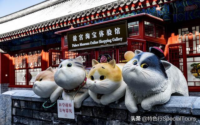 撸色地_故宫又搞事情!巨型御猫登场 让人忍不住想撸猫 - 青岛新闻网