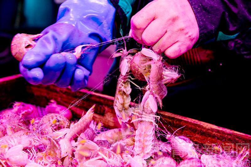 廣州螞蟻搬遷 【嘗鮮】谷雨時節海鮮肥美鲅魚當流 錯過等一年