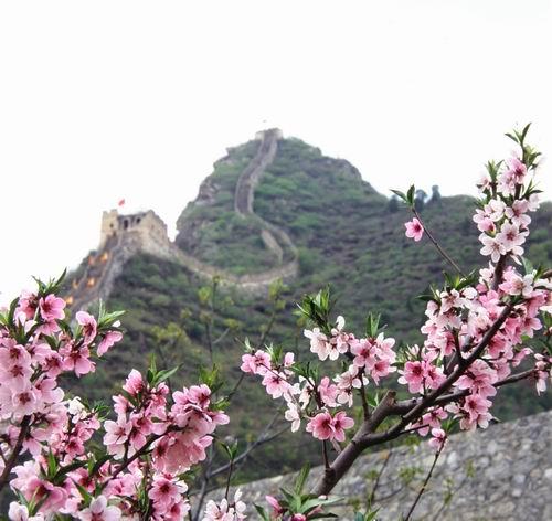 特别是成片成片山杏花,漫山遍野;上千亩桃树,梨树,苹果树,红果树等