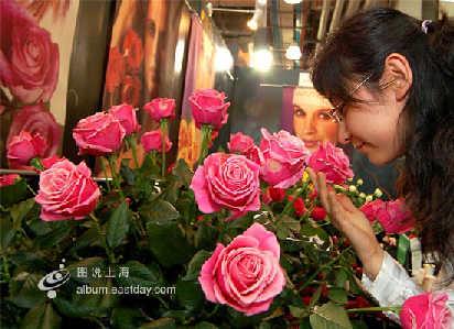 """走进中国国际花卉园艺展,观众仿佛走进了绿色的""""大观园"""".鲜切花图片"""