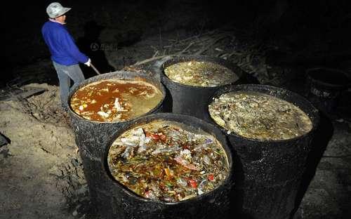 蓝矾韭菜又上桌 盘点中国人的生化食谱图片