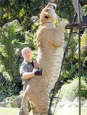 各地巨型动物盘点-青岛新闻网