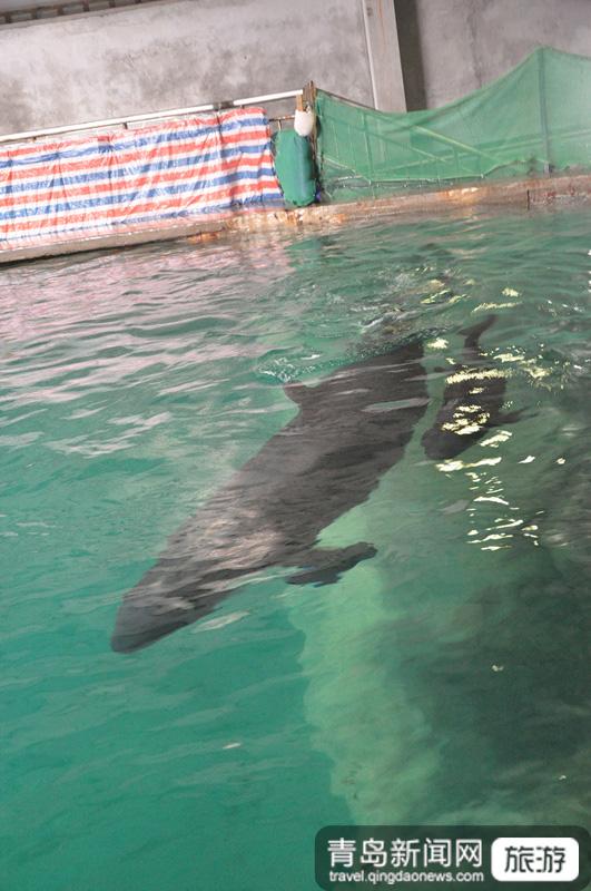 海豚母子图标手绘