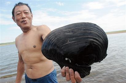 野生河蚌清理步骤图解