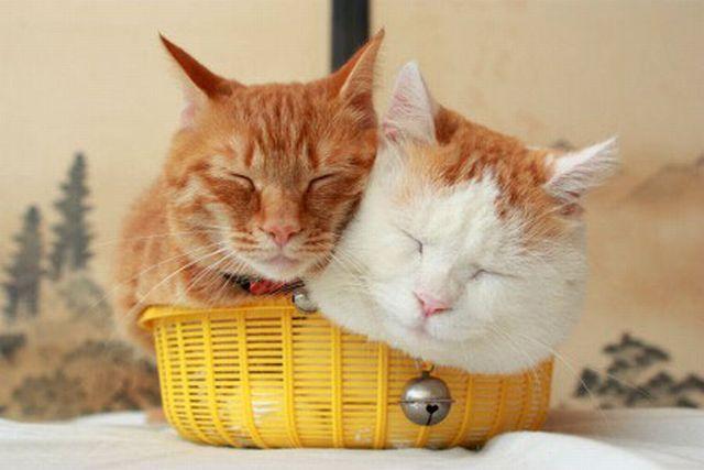 萌死人的猫咪图片集_搞笑动物图片; 超萌动物搞怪; 超萌动物搞怪起来