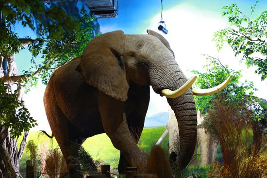 山东省最大世界动物标本馆建成