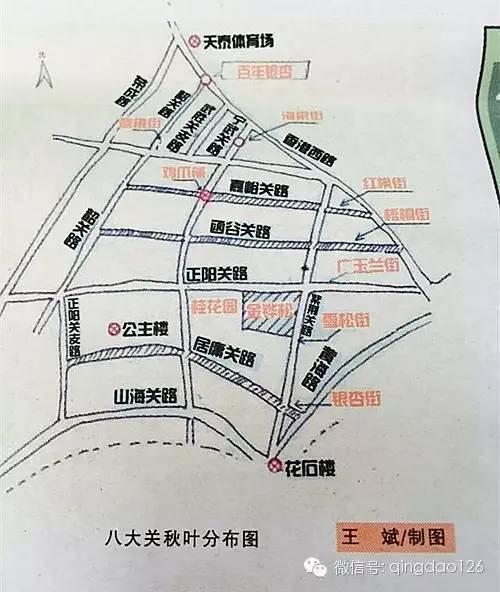 榉树:百花苑公园和中山公园;     栾树:(原)胶南双珠公园和胶州三里河图片