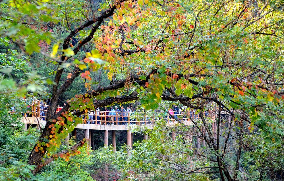 每年10月中旬到11月下旬,都是赏秋看叶的时节,崂山风景区近日发布4条