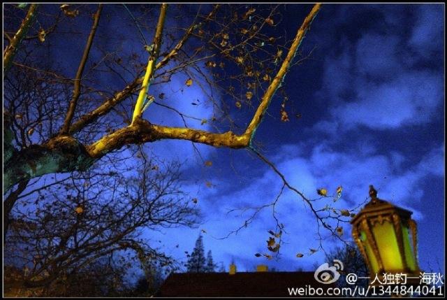 青岛旅游播报 | 八大关的冬天,即使没有红叶依然很美