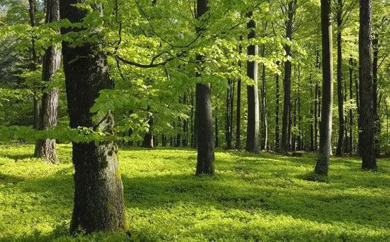 大自然床垫3·12植树节:科学理性利用森林资源
