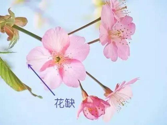 花朵制作图解步骤