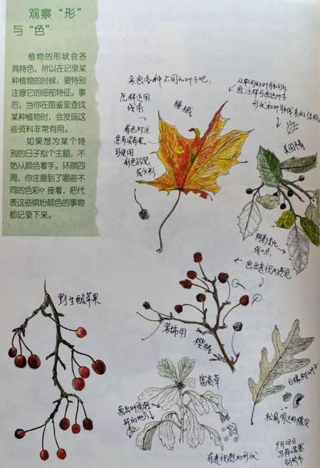 青岛园林公益课堂之入伏自然笔记开始报名啦