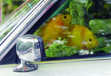 新华社/ 路透  9月3日,在新加坡一家海鲜餐馆前,透过一辆汽车的左前窗