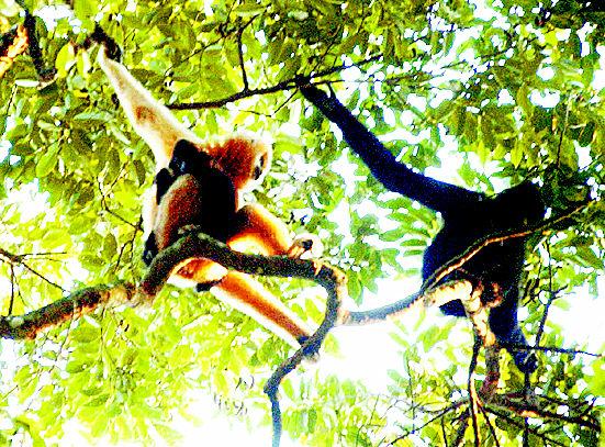 雨林动物高清图片